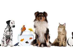 Állatok világnapja: Akiknek nincs hangjuk