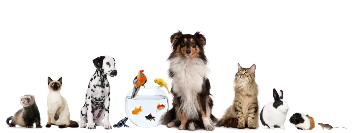 5_pets.jpg
