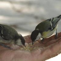 Kis madárka kalandja