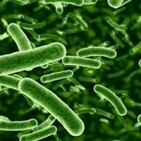 'Gonosz' baktérium segíthet kordában tartani a cukorbetegséget