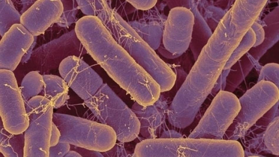 gut_bacteria_2.jpg