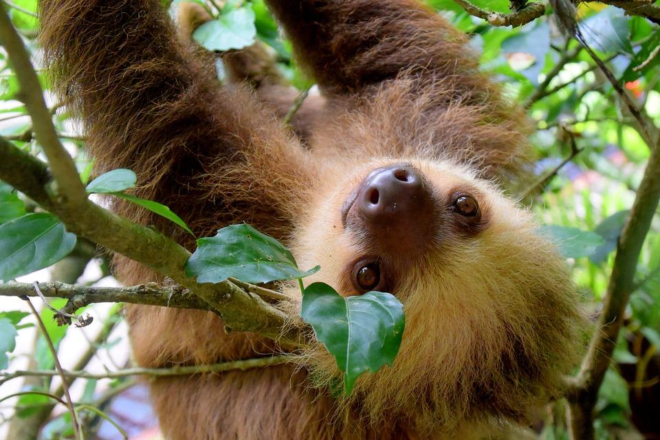 sloth-1879999_960_720.jpg