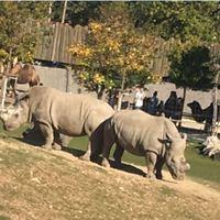 3 ok amiért idén nem a budapesti állatkertbe mentünk