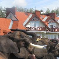Mit csinál az elefánt ha a Balatonon jár?