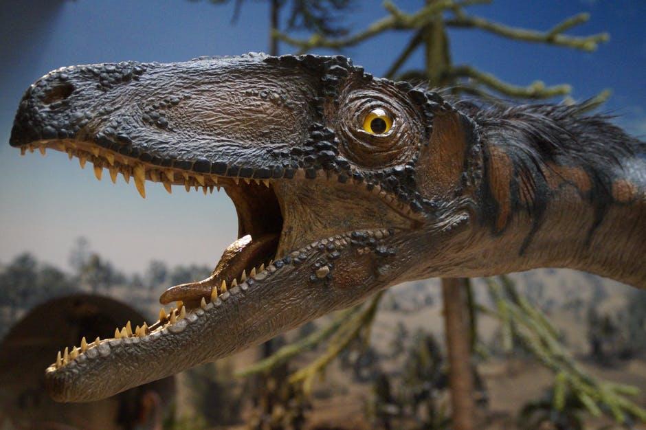 prehistoric-times-urtier-museum-exhibit-161959.jpg