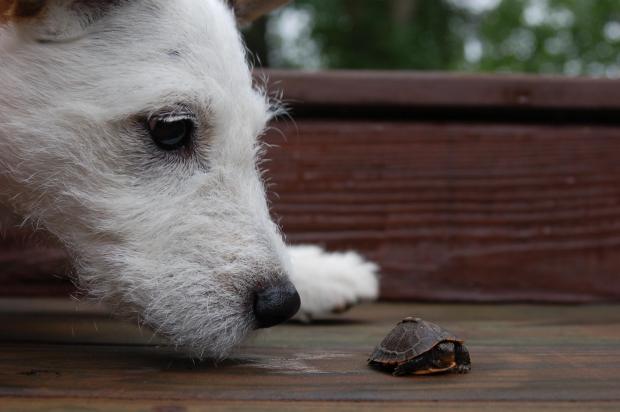 kutya_és_teknős.jpg
