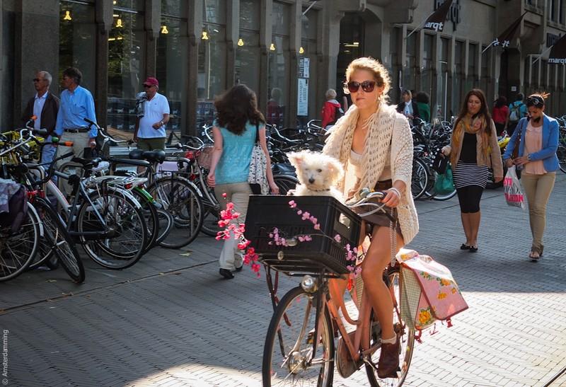 hollandia_amszterdam_amsterdamming_blog_cim.jpg