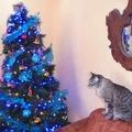 Karácsonyi hagyományok és határátkelés