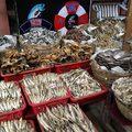 Krokodilhús és tengeri sün – piaci kalandok