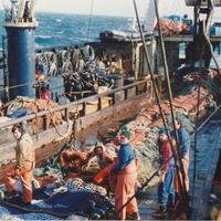 Hétköznapok egy halászhajón