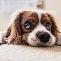 Amikor a kutya is három nyelven ért