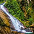 Vámpírok az Amazonason