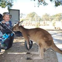 Kenguruk és koalák földjén
