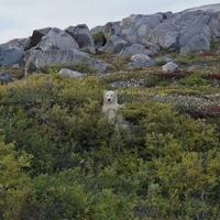 Élet a jegesmedvék földjén