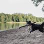 Miért igazán jó kutyának lenni Németországban?
