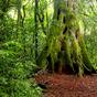 Egy mesebeli erdő mélyén