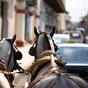 Menekülés és kakaótúra Nicaraguában