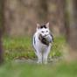 Hollandia varjaktól a macskákig