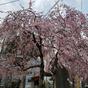 A tokiói álom