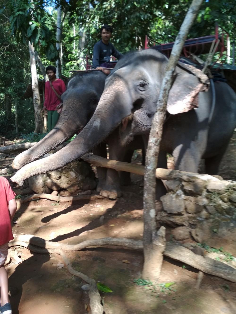 6_elefant.jpg