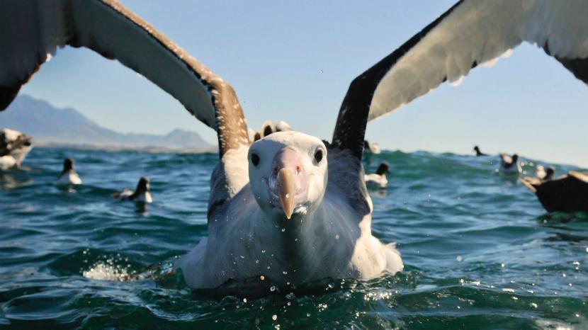 albatrosz.jpg