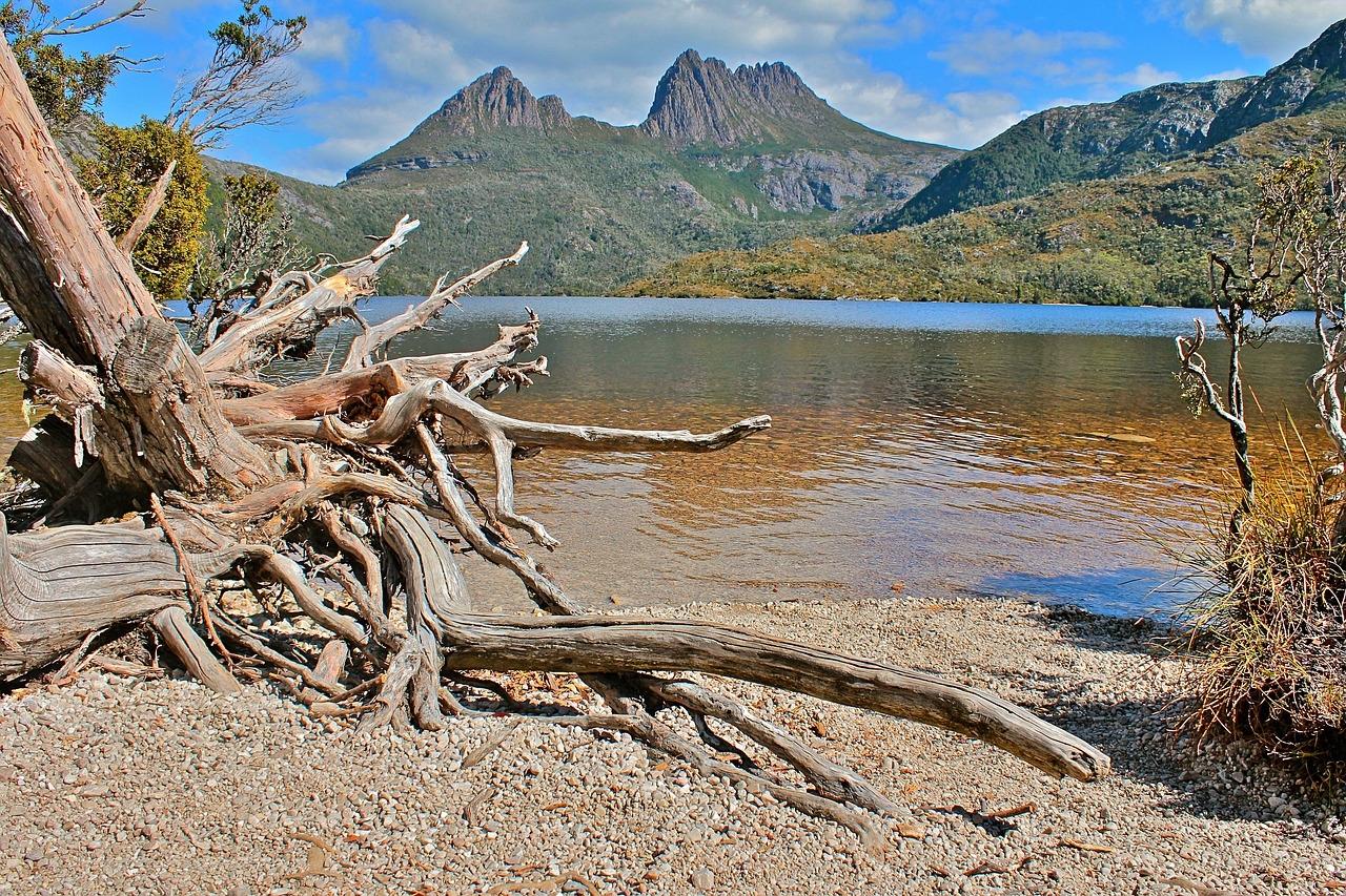 ausztralia_tasmania_fa_foto_pixabay_comjonny_joka.jpg