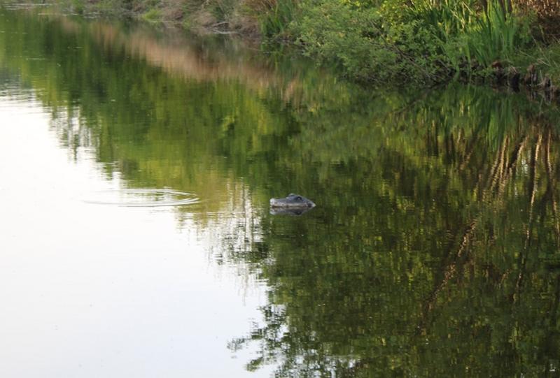 hollandia_krokodil.jpg