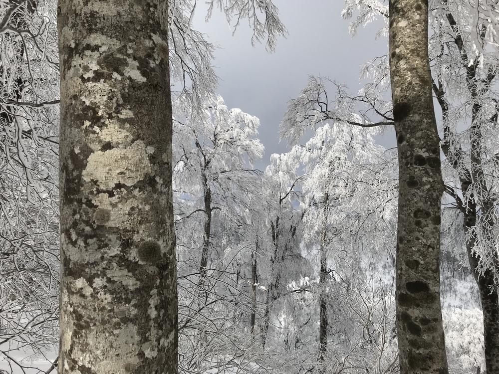 japan_havas.jpeg