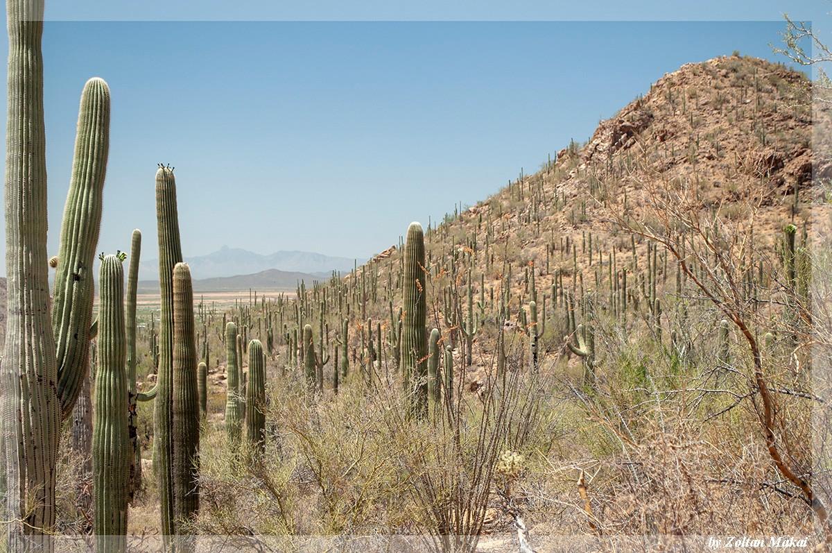 saguaro_5.jpg