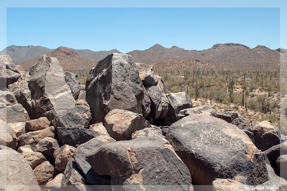 saguaro_6.jpg