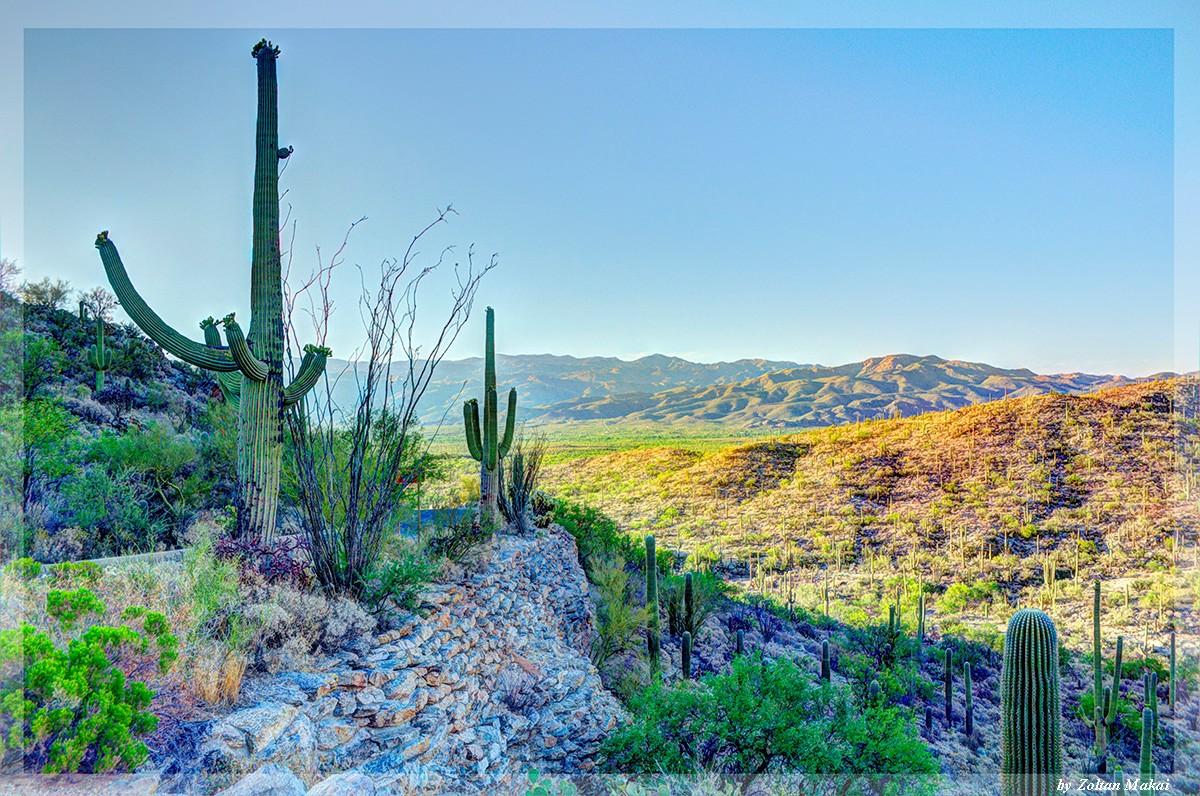 saguaro_7.jpg