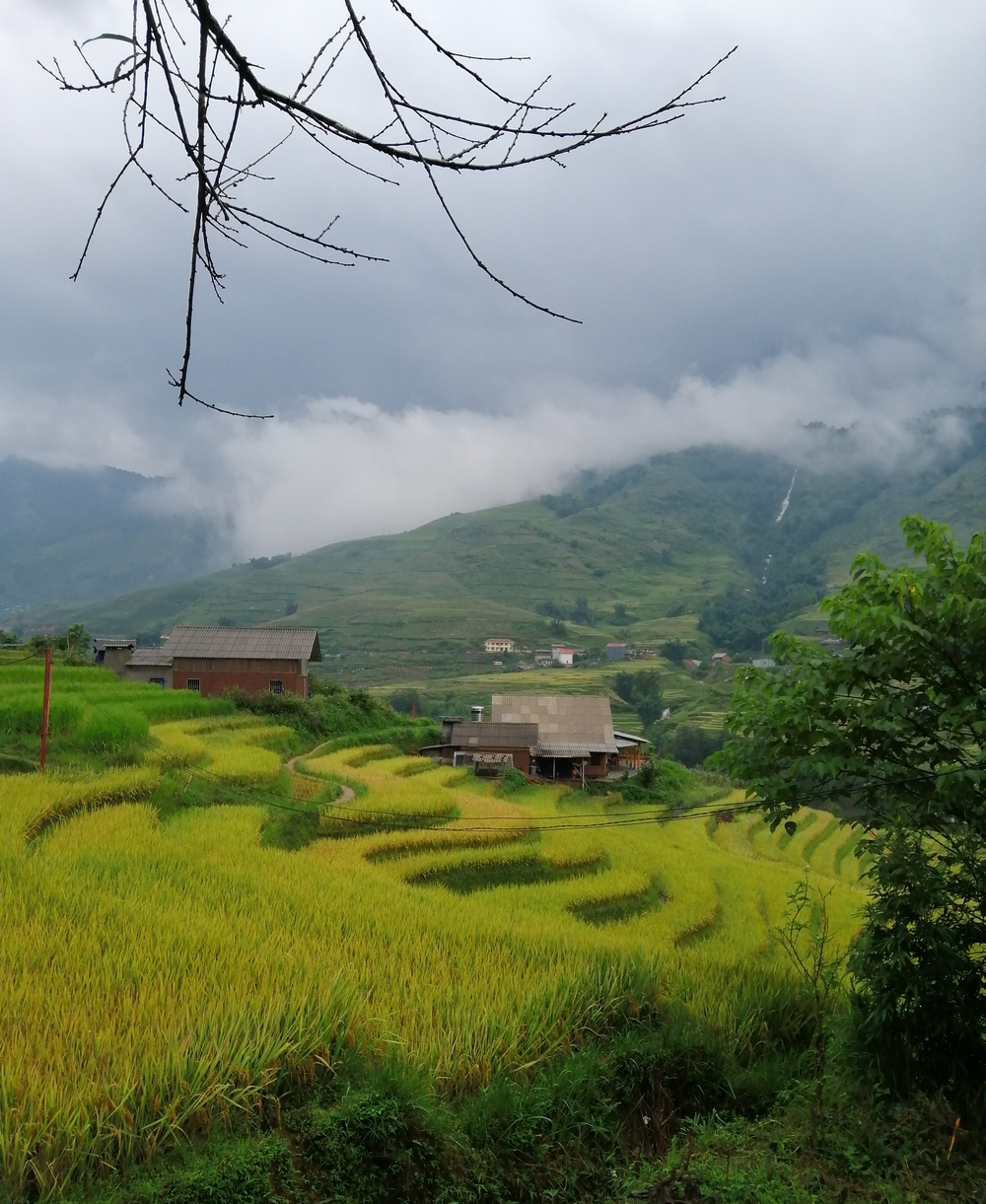 vietnam-rizsteraszok.jpg