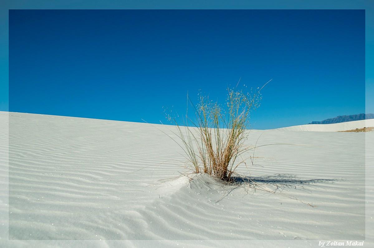 white_sand_5.jpg