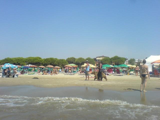 Medve a strandon.JPG