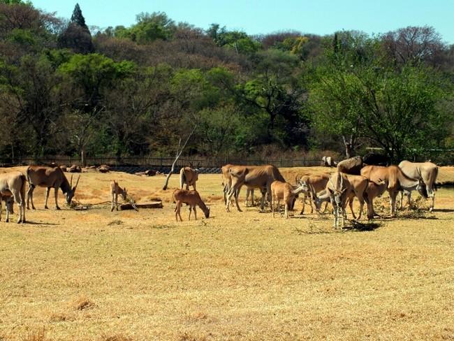 Pretoria állatkert.jpg