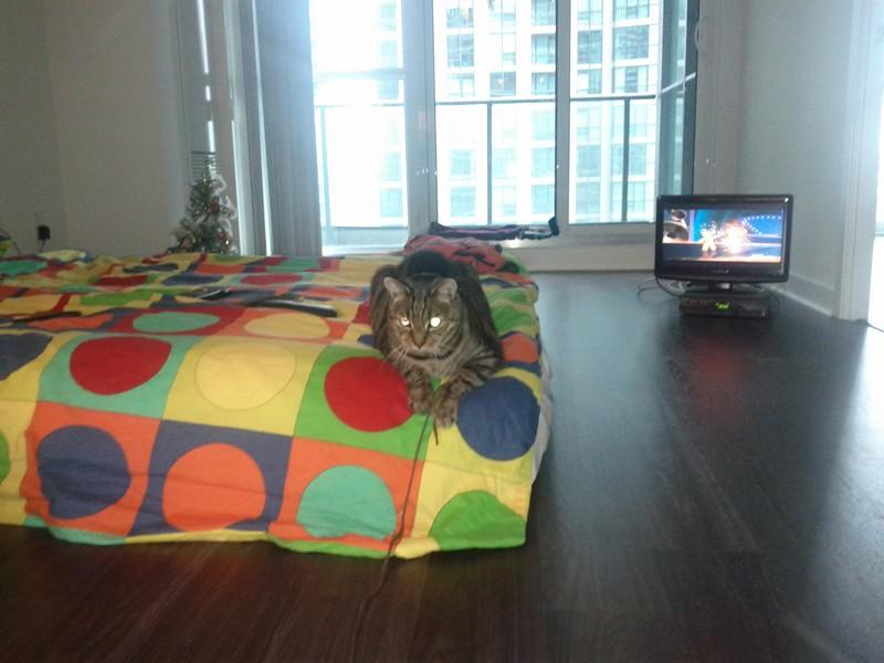 """""""2011. december közepén költöztünk a tengerentúlra a férjemmel és a  cicánkkal. Tudtuk 116d558c11"""