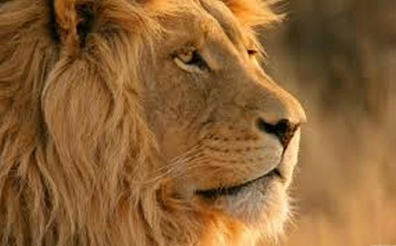 d_l-afrika_kruger_nemzeti_park_4.jpg