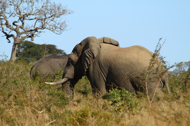 elefántok.jpg
