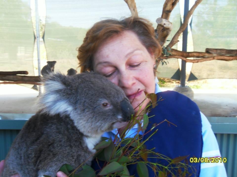 koalaval.jpg