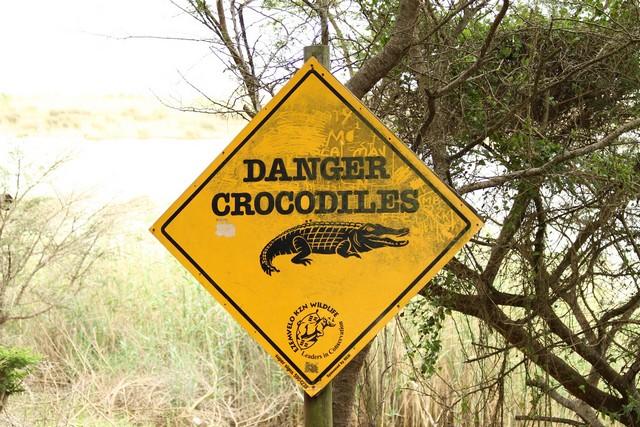 krokodilos tábla.jpg