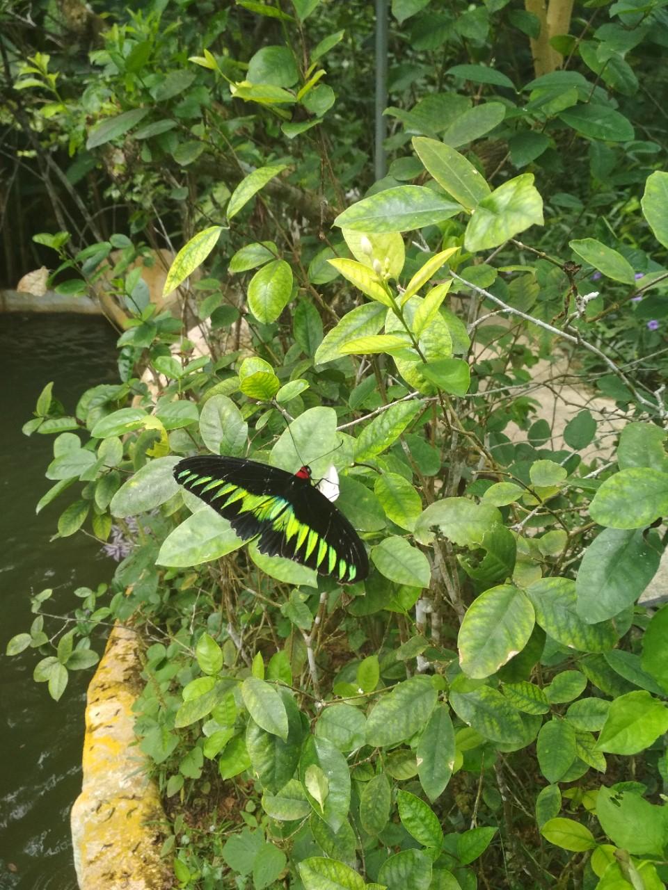 pillangopark_2.jpg
