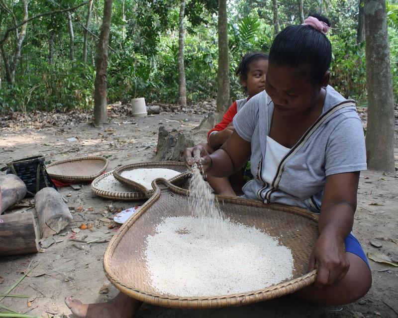 Látogatásomkor a faluban épp rizsbegyűjtés folyik, a folyamat akár egy hónapig is eltarthat.
