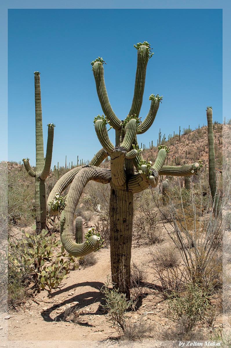 saguaro_3.jpg