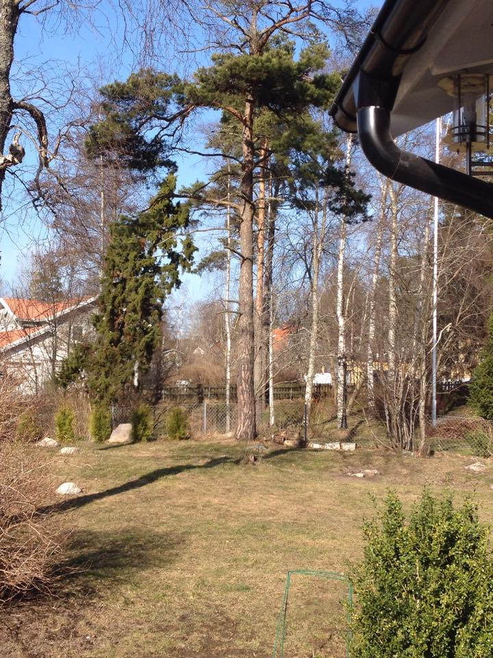 stockholm_svedo.jpg