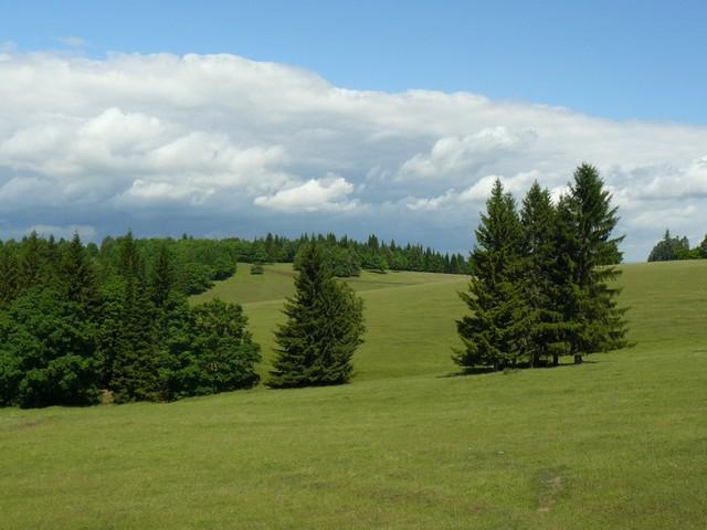 vidéki táj nyár elején.jpg