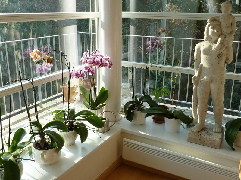 orchideak.JPG