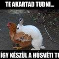 Hamarosan tojik a nyúl. Közeleg a húsvét!