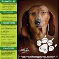 Első ivartalanított kutyák szépségversenye!