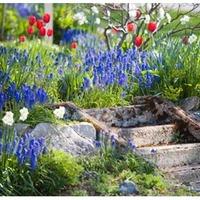 Lassan előbújnak azok a gyönyörű tavaszi virágok!