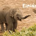 Cuki elefántos háttérképek